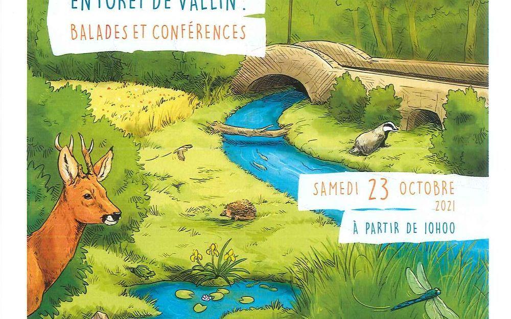 Animations en forêt de Vallin-balades et conférences